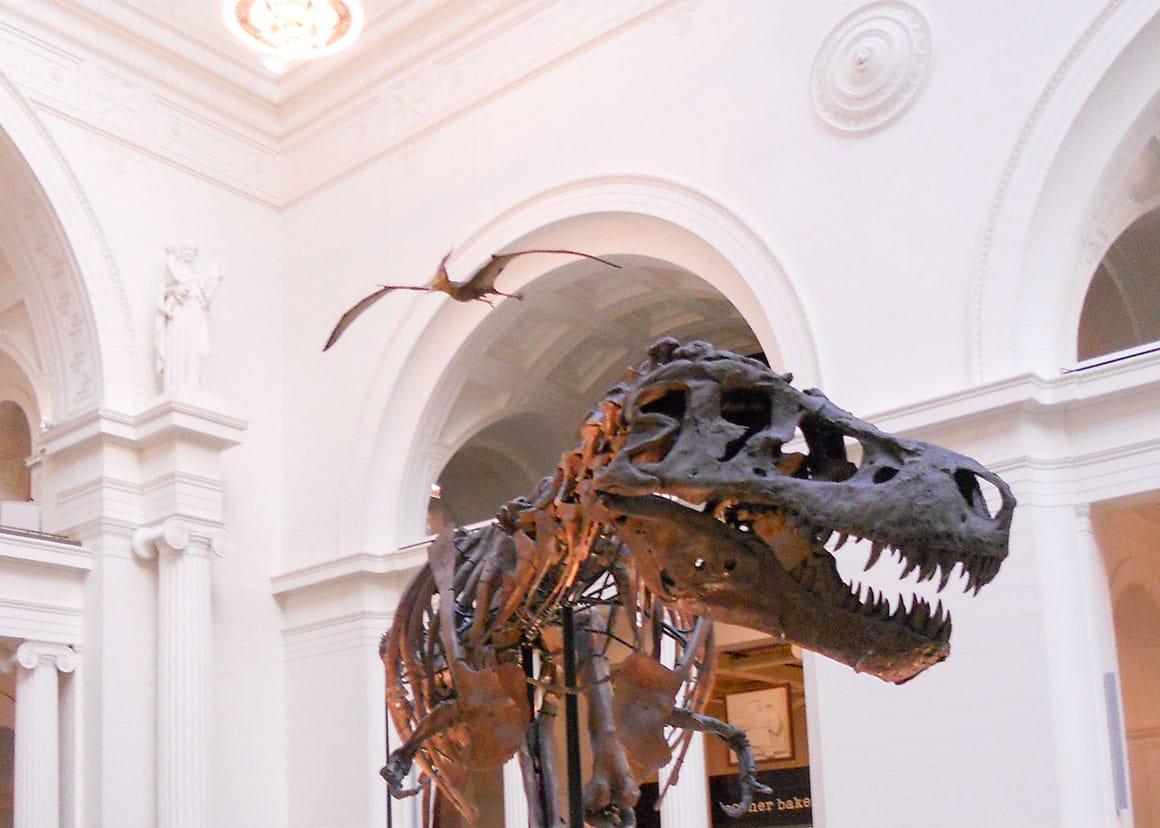 Tyrannosaur and pterodactyl